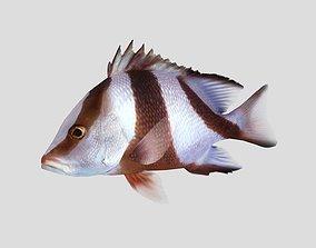3D model Emperor Red Snapper Fish