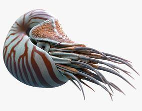 3D model Nautilus belauensis