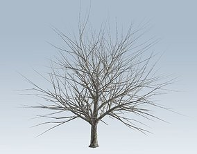 Tree without leaves 3D model