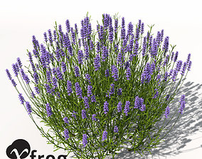 XfrogPlants Lavender 3D model