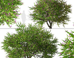 3D Set of Bauhinia purpurea or Orchid Tree - 2 Trees