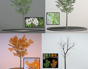 Rowan Tree - Sorbus-Aucuparia - 4m - All Seasons 3D asset