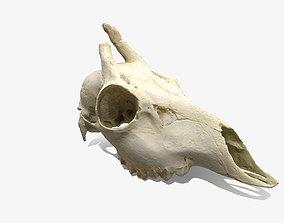 Skull - Deer 3D model low-poly