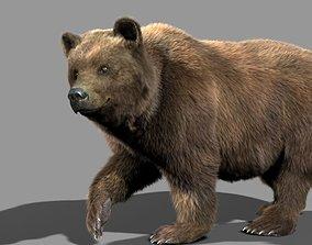 Bear braun 3D model