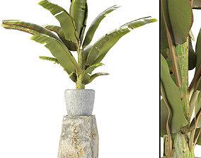 flowerpots 3D Plant in Pot Flowerpot Exotic Plant