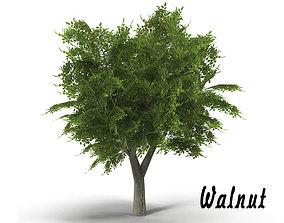 Walnut tree low poly 3D asset