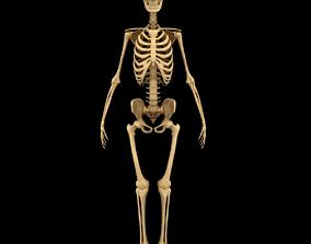 3D Full Body Skeleton System Anatomy