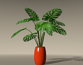 3D Swiss Cheese Plant