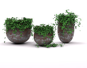 3D asset Lovely LILY Pots