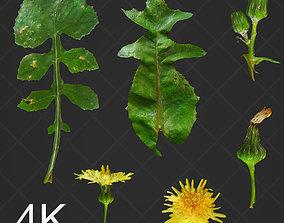 4K PBR Dandelion Photoscan atlas flower 3D