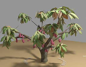 Cacao Tree type CCN51 with Fruit 3D model