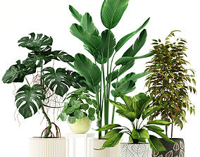 3D Plants collection 117