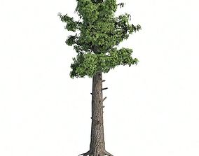 Giant Redwood Tree 3D model low-poly