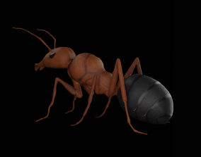 3D model Realistic ant