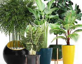 bamboo 3D model Collection plants