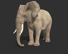 animals elephant 3D model animated game-ready