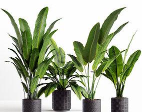 3D model Collection plants 06