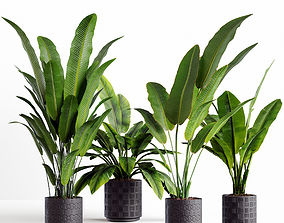3D model Collection plants 06