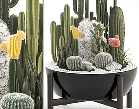 3D Collection of Exotic Cactus Plants 6