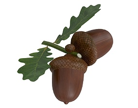 Dried acorns with leaf 3D model