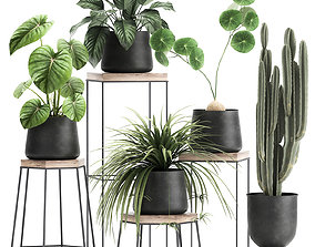 Houseplants in a pot for the interior 899 3D