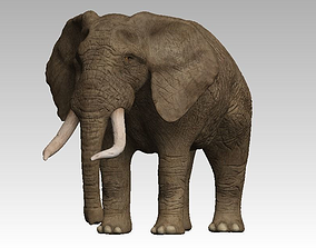 Brown Elephant 3D asset
