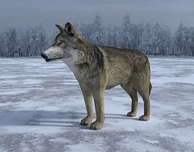 3D model Gray Wolf Low Poly
