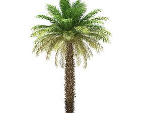 Date Palm Tree 3D Model 7m