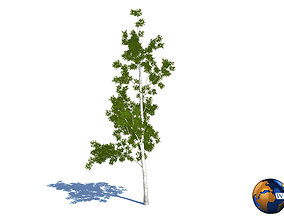 Tree willow salix realistic 3d model game-ready