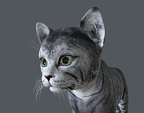 3D model KITN-015 Kitten Cat