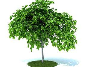 Green Artificial Garden Plant 3D model
