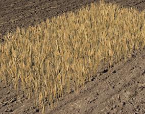 Wheat field 3D asset
