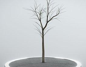 Rowan Tree - Sorbus-Aucuparia - 4m - Winter 3D model