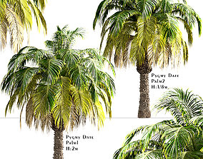 Set of Pygmy Date Palm or Phoenix Roebelenii 3D model 3