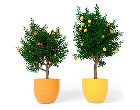Citrus 3D