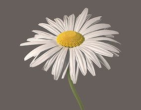 Daisy Flower blooming 3D model