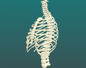 3D Human thorax in some formats