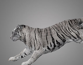 animated Tiger Animated 3D model