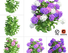 3D model Plants Hydrangea set 02