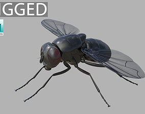 3D model Fly insect