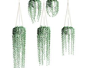 Hanging succulents in hanging pots - 5 models 3D