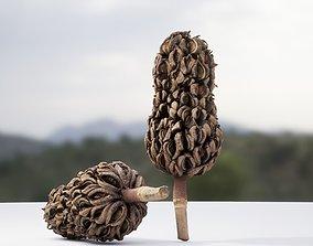 3D Cone Magnolia Photoscanned 8k