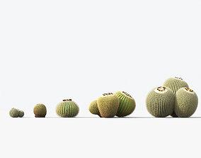 3D Echinocactus grusonii Golden barrel cactus 01