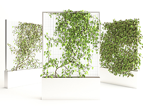 Planter With Plants-Ivy 3 3D