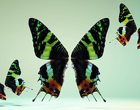 Butterfly 10 3D asset
