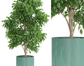 Plants collection 425 3D model