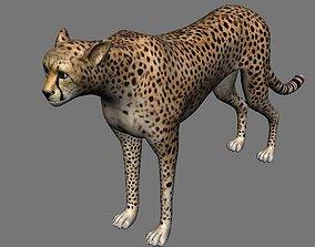 Leopard Panther Puma Jaguar Model Rig animated
