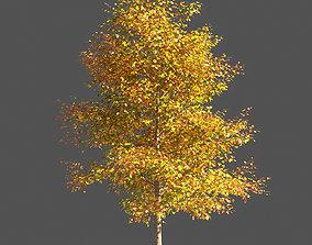 3D model TULIP TREE 2