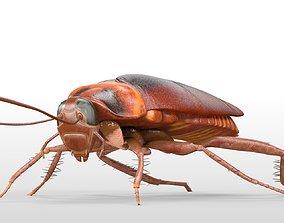 3D asset Cockroach Rigged