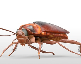 3D asset Cockroach Rigged